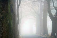 与路在雾-易北河的德国Elbtalaue国家公园的树大道 免版税库存照片