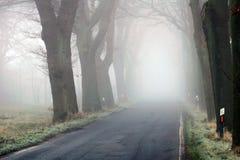与路在雾-易北河的德国Elbtalaue国家公园的树大道 免版税图库摄影