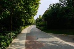 与路面的涂柏油的方式在旁边在修造在树o前 图库摄影