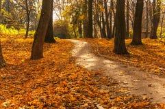 与路面的车道在秋天公园 免版税库存照片