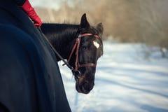 与车手的一匹马回顾 库存图片