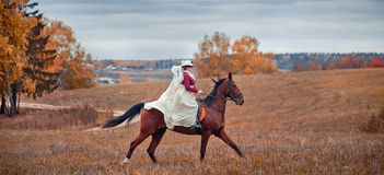 与车手的马狩猎在女骑装 库存图片