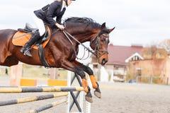 与车手的马跳过在展示跳的障碍 图库摄影
