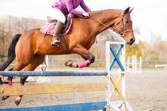 与车手的马跳过在展示跳的障碍 库存照片