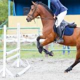 与车手跳跃的障碍的马在展示跳跃 库存图片