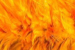 与软的纹理的橙色鸡羽毛背景 库存照片