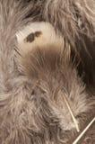 与软的纹理的羽毛背景 免版税库存照片