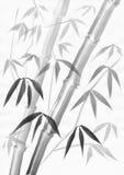 与轻的叶子的竹绘画 库存照片