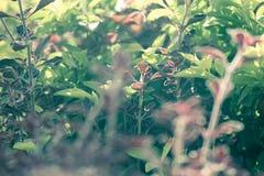 与轻的太阳光芒的模糊的leavesimages 库存照片