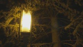 与轻的灯笼的冬天装饰在杉树松树背景 夜雪圣诞节背景 影视素材