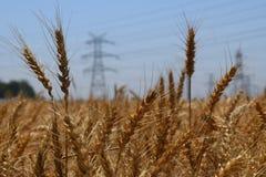 与输电线的金黄夏天Wheatfield在被弄脏的背景中 免版税库存照片