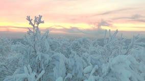 与迅速浮动云彩的积雪的木头 股票录像