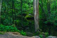 与迅速潮流的一条山小河在一个绿色夏天森林里 库存图片