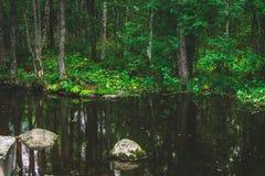 与迅速潮流的一条山小河在一个绿色夏天森林里 免版税库存图片