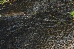 与迅速潮流的一条山小河在一个绿色夏天森林里 免版税库存照片