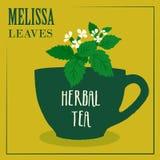 与迈利萨角叶子的清凉茶 标签的设计 免版税库存图片