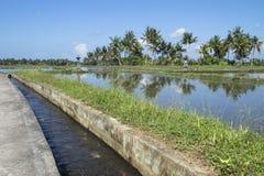 与运河的被充斥的ricefield在Ubud,巴厘岛,印度尼西亚 免版税库存图片