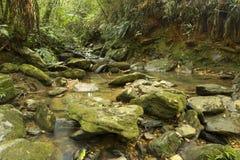 与运行在岩石中的下落的叶子的长的曝光小河在一个密集的森林中间 库存照片