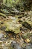 与运行在岩石中的下落的叶子的长的曝光小河在一个密集的森林中间 免版税图库摄影