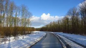 与运行通过森林的路的冬天风景 免版税库存照片