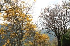 与近开花的黄色花的树在庭院里对山 库存图片