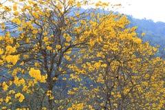 与近开花的黄色花的树在庭院里对山 库存照片