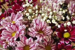 与这样花的多颜色花束象大丽花和菊花 免版税库存图片