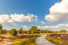与远足的开花的荷兰欧石南丛生的荒野和自行车落后 免版税库存图片