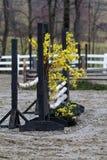 与连翘属植物的桦树跃迁 免版税库存图片