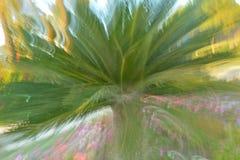 与迷离作用的棕榈树 库存照片