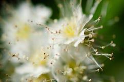 与迷离的开花的苹果树 免版税库存图片