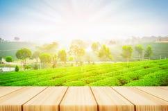与迷离茶园和阳光的木桌 免版税库存照片
