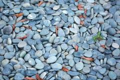 与选择聚焦和浅景深的海石头 免版税库存照片
