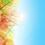 与透明叶子和蓝天的秋天构成 免版税图库摄影