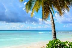 与透明的海的加勒比棕榈树在背景和a中 免版税库存照片