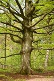 与透视人行道路的绿色forrest森林背景 免版税库存图片