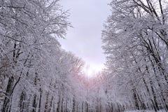 与透镜火光的积雪的森林风景 免版税库存图片