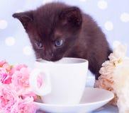与逗人喜爱的小猫的桃红色玫瑰 库存图片