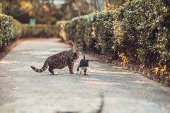 与逗人喜爱的小猫的猫在公园 库存图片