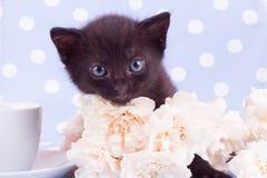 与逗人喜爱的小猫的白色玫瑰 库存图片