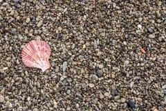 与逗人喜爱的简单的壳的小卵石背景作为背景图象 免版税库存图片