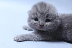 与逗人喜爱的面孔,特写镜头画象的小猫 图库摄影