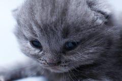 与逗人喜爱的面孔,特写镜头画象的小猫 免版税库存图片