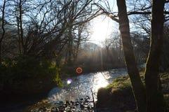 与通过发光在湖上的太阳的树 免版税图库摄影