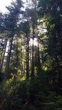 与通过发光的太阳的树 库存照片