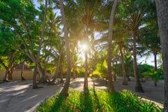 与通过发光的日落的棕榈树 库存照片