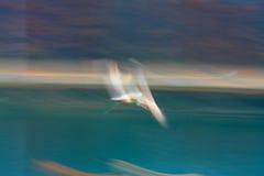 与速度和油漆作用的飞行海鸥 免版税库存照片