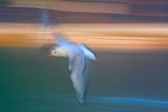 与速度和油漆作用的飞行海鸥 免版税库存图片