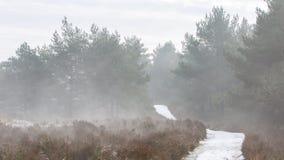 与道路的有雾的荷兰风景 免版税库存照片