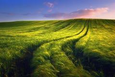 与道路的金黄麦田在日落时间 图库摄影